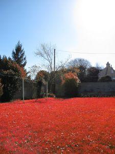 Rouge Sang 2010